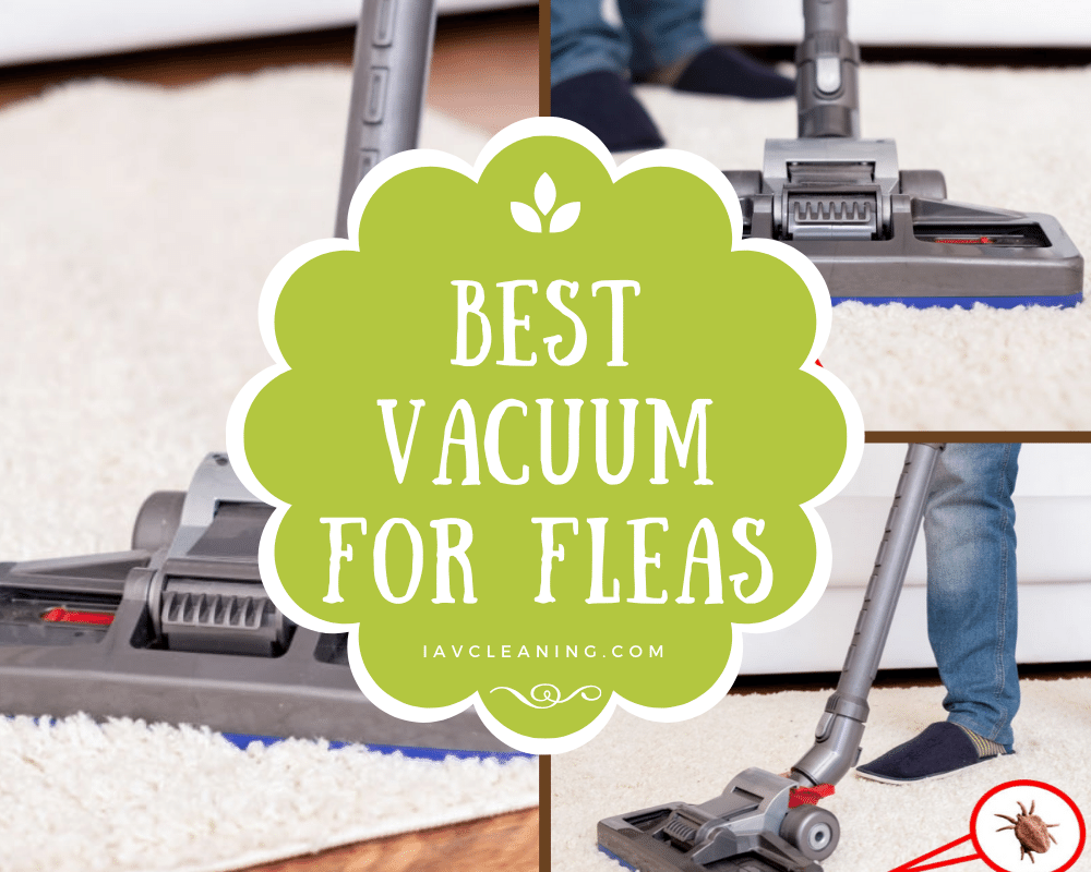 Best Vacuum for Fleas | IAV Cleaning